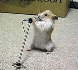 Singing gerbil