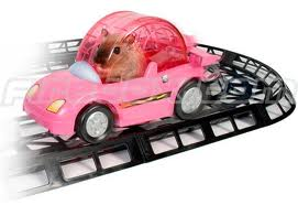Gerbil in car